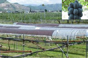 Fruit tree cultivation test site