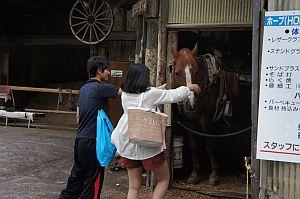 人懐こいかわいい馬